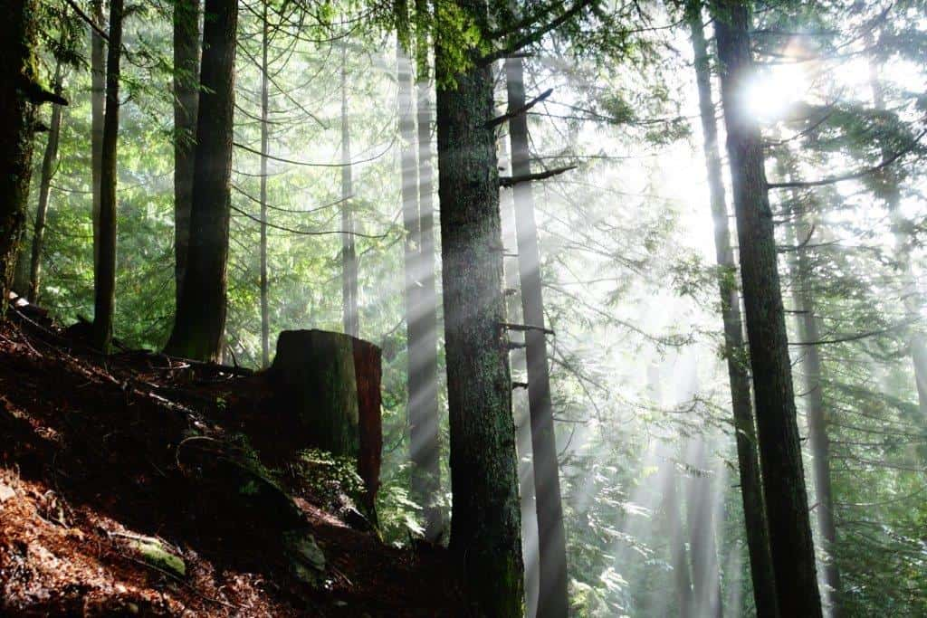 Sunshine bursting through the trees on the Grouse Grind Trail
