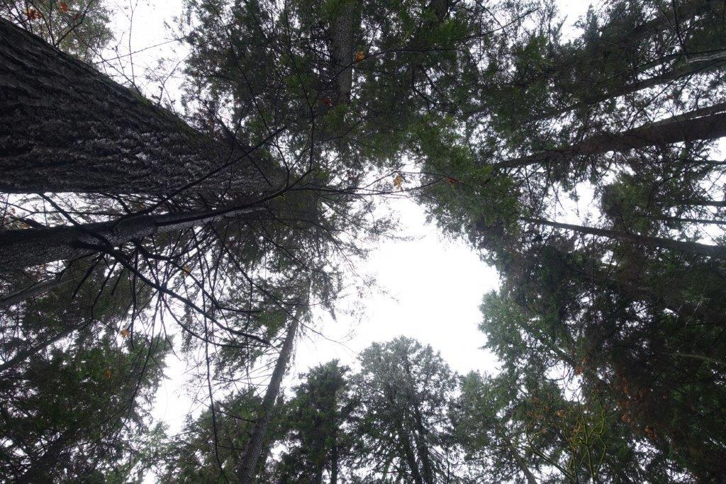Under the Canopy of Trees along the trail to Quarry Rock Lookout Point