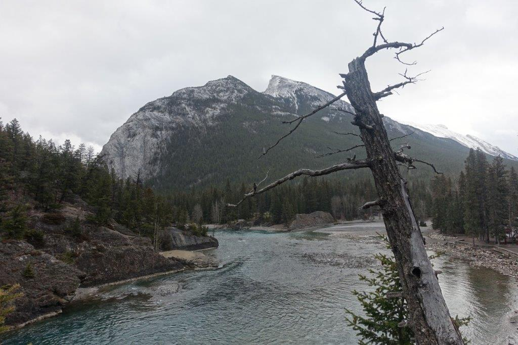 View of the Bow Falls stream as you trek along