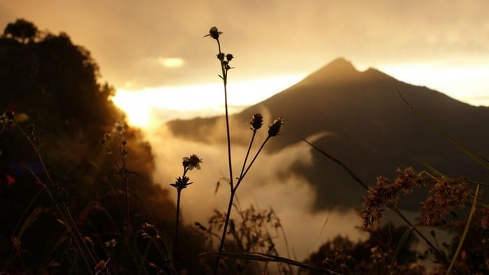 wild-flowers-and-clouds-at-mount-rinjani - Conquering the Mount Rinjani Trek