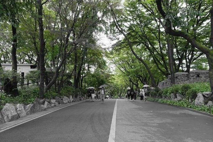 Walking through namsan park in summer