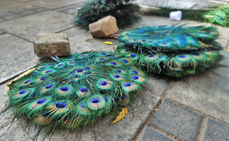 Peacock fans on sale while strolling along the streets.