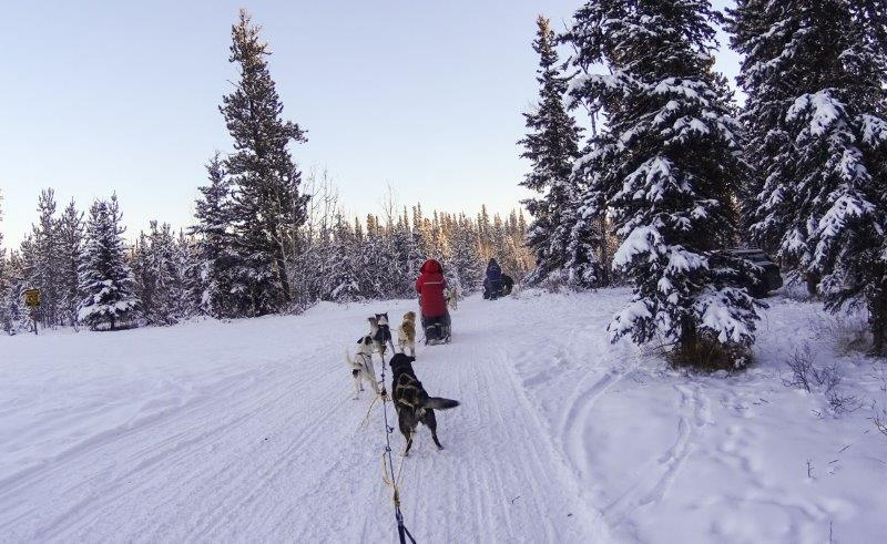dogsledding in yukon | canada winter outdoor adventures to do