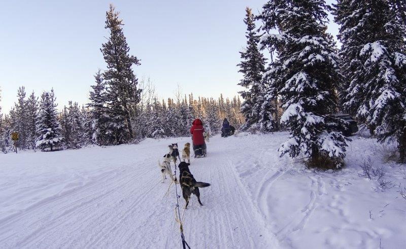 dogsledding in yukon | canada winter outdoor adventures to do