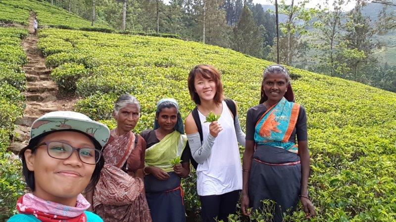 Tea plantations at nuwara eliya