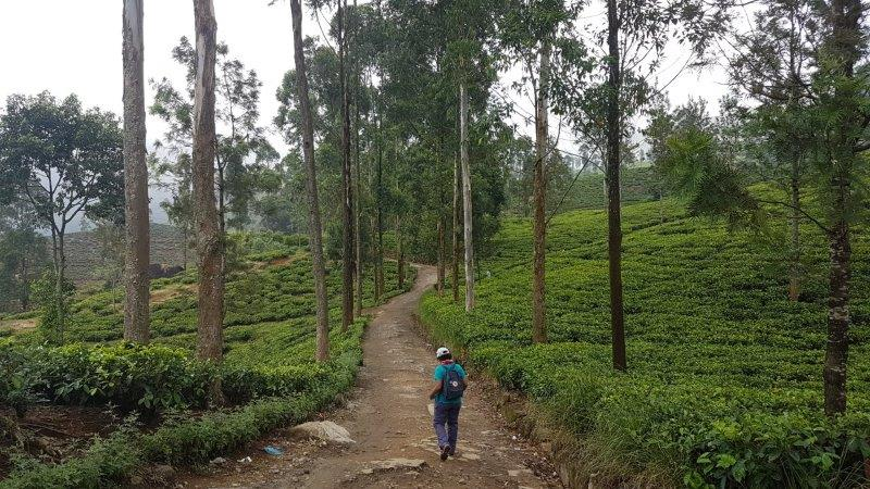 Down the trails of the tea plantations